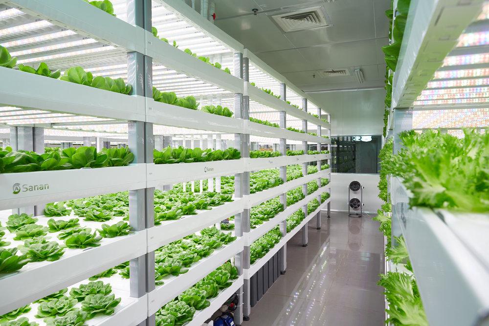 Vertical Farming Consulting utilizza i sistemi di Sananbio.