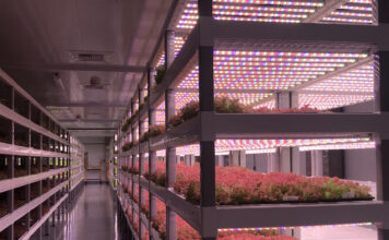 Vertical Farming Consulting