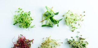 Microgreens varietà